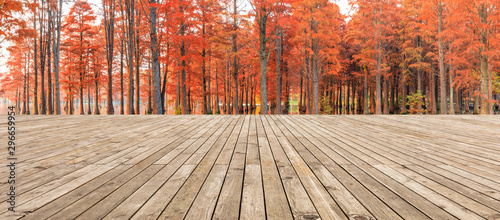 La pose en embrasure Beige Empty wooden board square and beautiful colorful forest in autumn