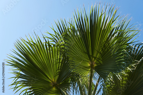 Photo palm fronds