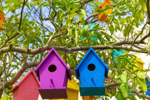 Photo  Two birdhouses purple and green on mandarin tree