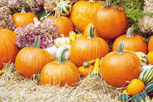 Beautiful Display Of Pumpkins And Gourds With Autumn Flowers