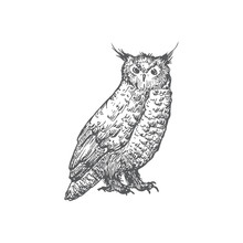 Hand Drawn Halloween Scary Owl Vector Illustration. Abstract Rustic Bird Sketch. Holiday Engraving Style Drawing.