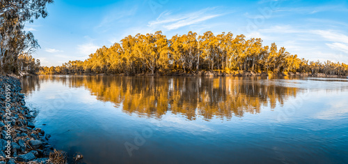 Foto op Canvas Blauwe hemel Panorama of trees reflecting in Murray River at sunset