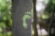 green footprint on a tree trunk