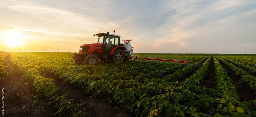 Fototapeta Tractor spraying soybean field in sunset