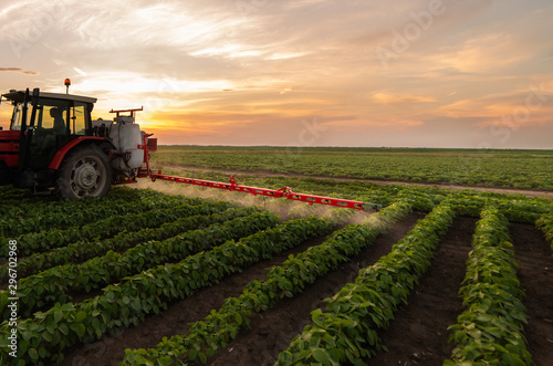Tractor spraying soybean field in sunset Canvas