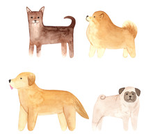 Hand Drawn Watercolor Dogs Set. Painted Collection Illustration Isolated On White Background.