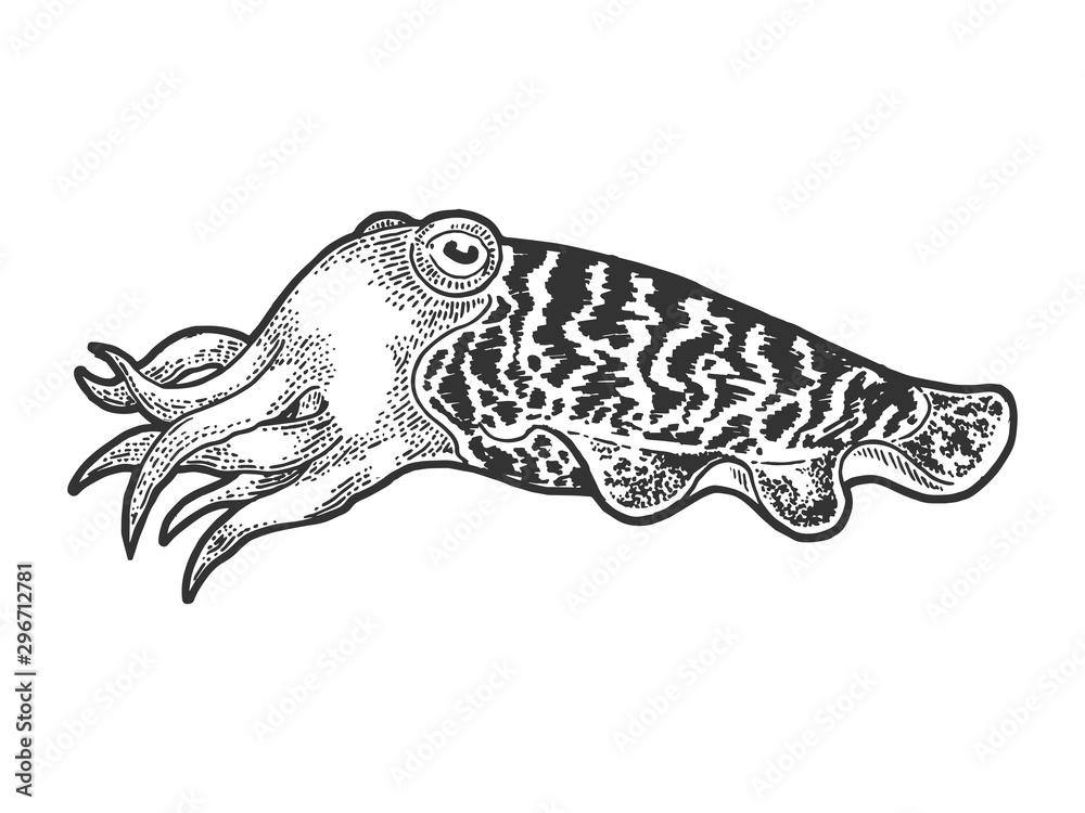 Fototapety, obrazy: Cuttlefish marine mollusc animal sketch engraving vector illustration. T-shirt apparel print design. Scratch board style imitation. Hand drawn image.
