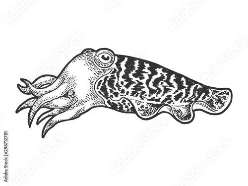 Obraz na plátně Cuttlefish marine mollusc animal sketch engraving vector illustration