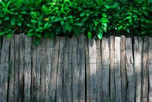 Une Clôture En Bois Et Des Arbustes Et Du Feuillage Pour Cacher Le Voisin