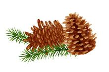 Pine Cones Vector In Watercolo...