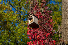 Wooden Bird Feeder On A Tree With Bright Red Leaves.