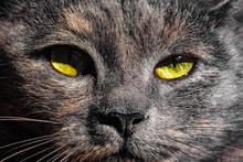 Dark Gray Cat With Yellow Eyes Looks Straight Into The Camera Against A Blue Sky.
