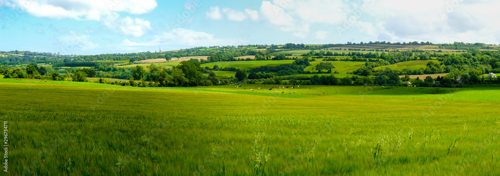 Fototapeta Scenic panoramic view of rolling countryside green farm fields with sheep, cow  and green grass in New Grange, County Meath