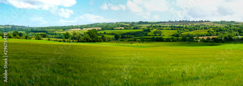 Foto Scenic panoramic view of rolling countryside green farm fields with sheep, cow