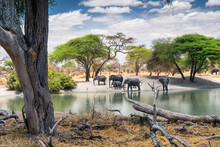 Family Of African Elephants Drinking At A Waterhole In Tarangire National Park. Tanzania. Amazing Blue Sky And Green Tree In A Background