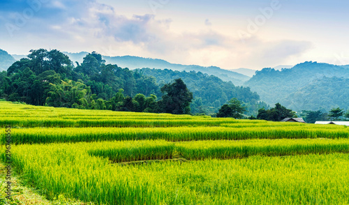 Montage in der Fensternische Reisfelder Green and yellow color terraced rice field in north of Thailand