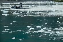 Iced Water At Glacier Bay National Park, Alaska