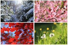 Collage Images Of Four Seasons