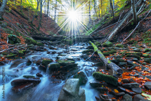Wall Murals Forest river Picture of autumn Carpathian forest with spring water and waterfall, strewn with yellow and red leaves and sunlight through the foliage of trees.