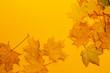 Leinwandbild Motiv Photo of autumn leaves, place for text, discounts, minus percent, autumn collection. Background