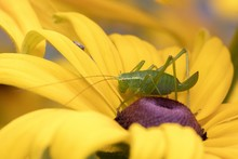 Macro Photography Of A Green G...