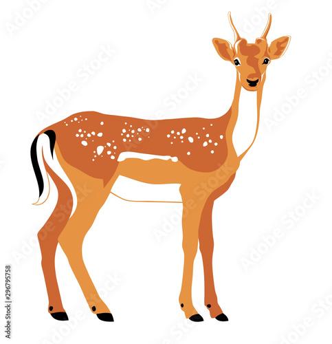 Tableau sur Toile Deer