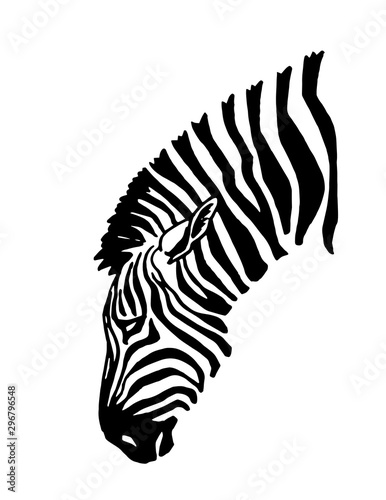 Cuadros en Lienzo  Graphical portrait of zebra isolated on white background,vector illustration
