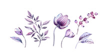Watercolor Purple Anemones Floral Illustrations Set. Hand-painted Realistic Botanical Bundle. Isolated On White Flowers, Leaves, Berries For Wedding Stationery, Card Printing, Banners