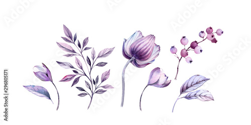 Fotomural Watercolor purple anemones floral illustrations set