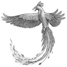 Phoenix Illustration, Drawing, Engraving, Ink, Line Art, Vector