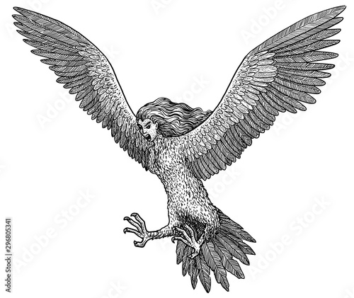 Fotografie, Tablou Harpy illustration, drawing, engraving, ink, line art, vector