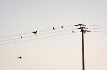 Birds And Antenna On Blue Sky ...