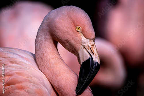 Photo Stands Flamingo Flamingo pink background
