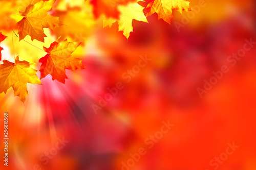 Foto auf Gartenposter Rot autumn landscape with bright colorful foliage. Indian summer.