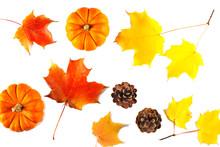 Autumn Consept Wotn Maple Leav...