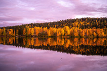 Autumn Colors In Rovaniemi