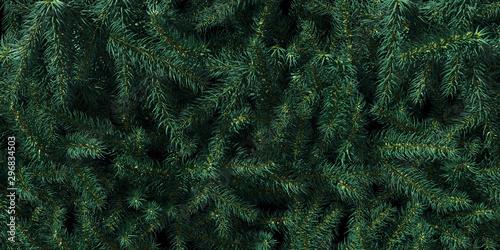 Vászonkép  Background of Christmas tree branches