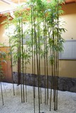 Bamboo , Japanese Culture and Spirit /  Japanese is loving a bamboo from the past and is introducing to all living space well.