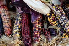 Dried Flint Corn