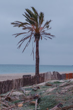 View Of Palm Tree On Beach