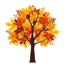 Vector Abstract Autumn Tree Isolated On A White Background.