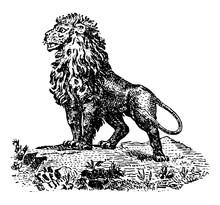 Cartoon Lion Vintage Illustrat...