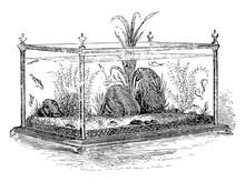 Freshwater Aquarium Vintage Illustration.