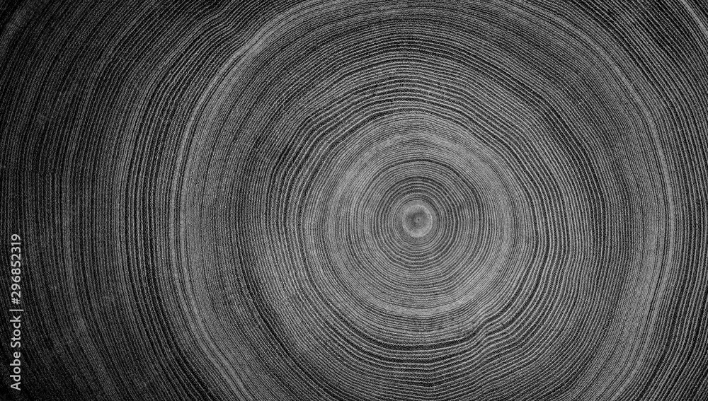 Fototapeta Black and white cut wood texture. Detailed black and white texture of a felled tree trunk or stump. Rough organic tree rings with close up of end grain.