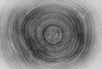 Panel Szklany Eko Black and white cut wood texture. Detailed black and white texture of a felled tree trunk or stump. Rough organic tree rings with close up of end grain.