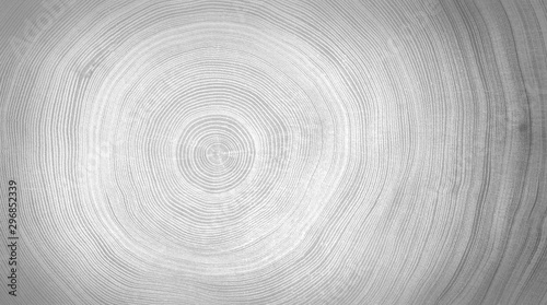 fototapeta na szkło Black and white cut wood texture. Detailed black and white texture of a felled tree trunk or stump. Rough organic tree rings with close up of end grain.