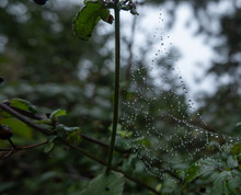Spider Web With Water Droplets...