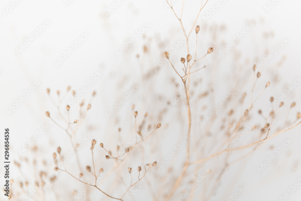 Fototapety, obrazy: Delicate Dry Grass Branch on White Background