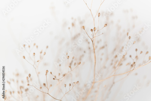 Door stickers Macro photography Delicate Dry Grass Branch on White Background