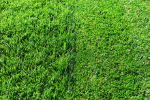 Green Fresh Grass. Partially Cut Grass Lawn. Difference Between Perfectly Mowed, Trimmed Garden Lawn Or Field For Sports, Golf And Long Uncut Grass. Lawn, Carpet, Natural Green Trimmed Grass Field.